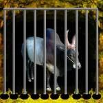 Bull Escape