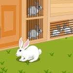 Rabbit Escape From Eagle