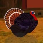 Turkey Farm House Escape