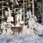 Frozen Forest Escape
