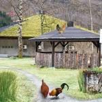 Livestock Farm Escape