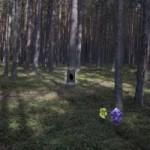 Coniferous Forest Escape