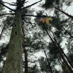 Bernati Forest Adventure